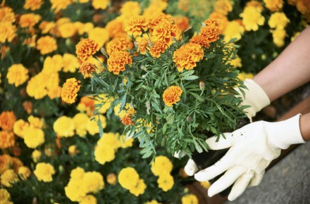 Gardening definitions