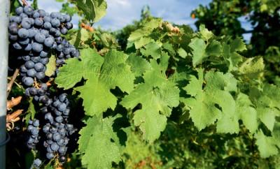 Illinois Wineries, Shawnee Hills Wine Trail