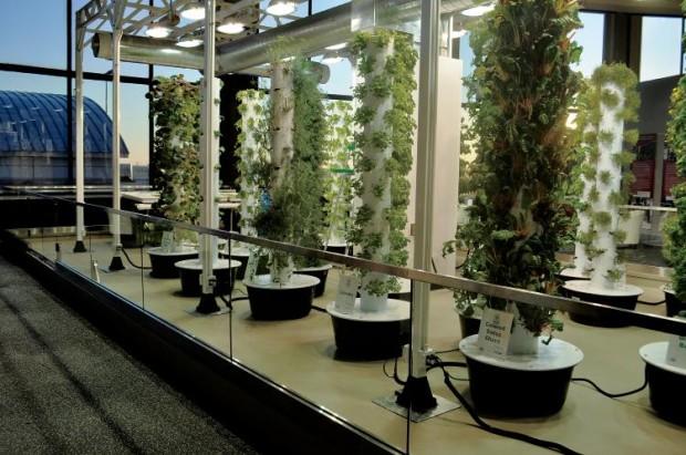 vertical gardens at Chicago O'Hare