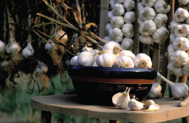 Garlic Farm Facts