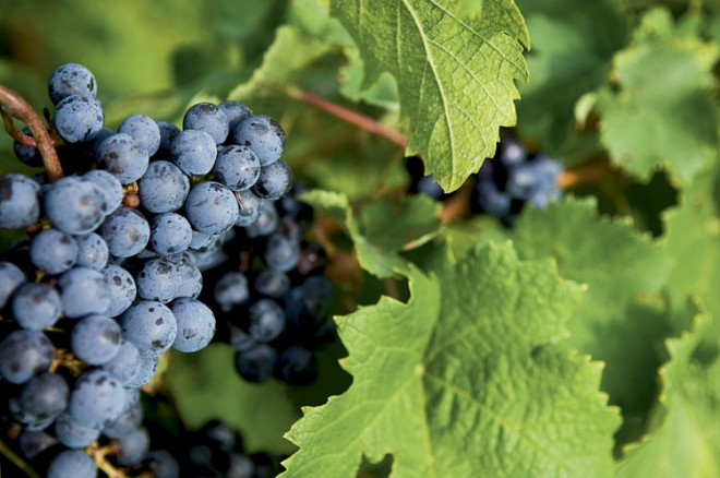 Southern Illinois' Shawnee Hills region is ripe for a wine-lover's weekend.