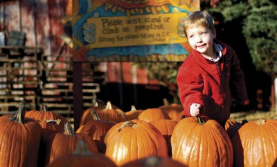 4-year-old Dylan Beilfuss looks for a pumpkin at The Pumpkin Patch in Caledonia, Illinois.