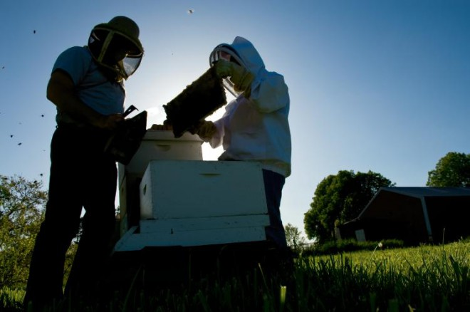 Dan and Janet Hart (members of Heart of Illinois Beekeepers Association) work with their bees at their home in Brimfield, Illinois.