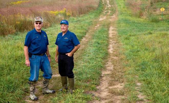 In prairie grasses, Indian grass and big blue stem