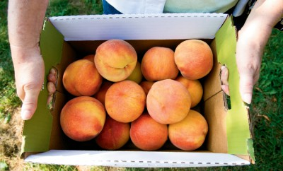 Peaches at Eckert's Country Store and Farms