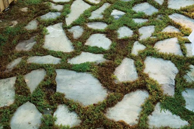Creeping red thyme used here between flagstone helps soften a patio area.