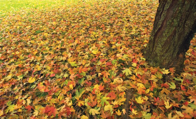 Fall leaves - lawn care