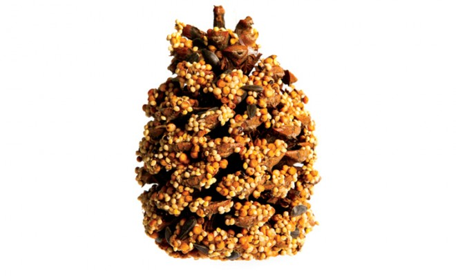 pinecone bird feeder