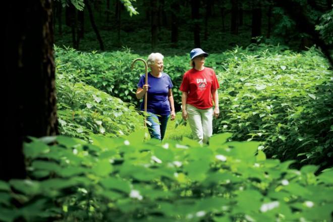 Wildflower walks in Elkhart Hill, Illinois