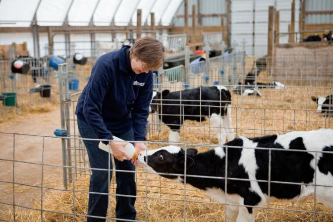 Linda Drendel feeds a calf at her dairy farm in Hampshire, Illinois