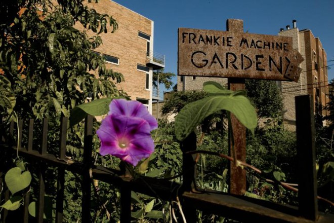 Chicago Community Gardens