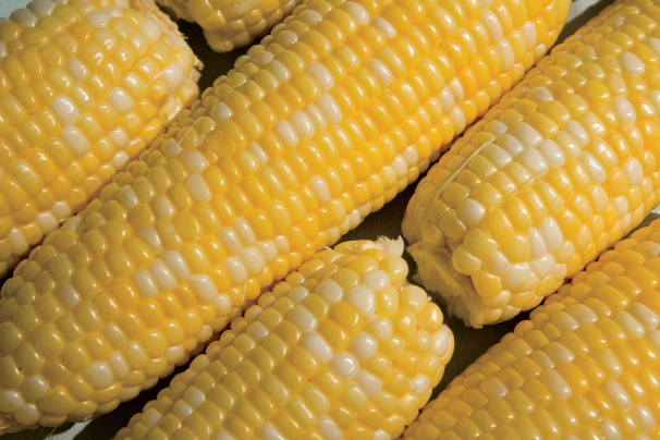 Sweet Corn and Blues Festival