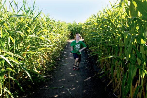 Corn Mazes in Illinois