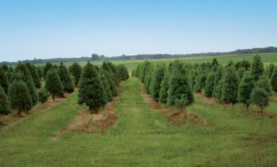 Shenandoah Tree Farm in Alma