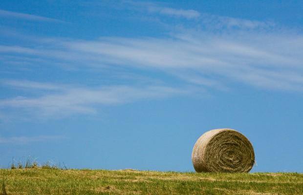 Farm Focus: Hay