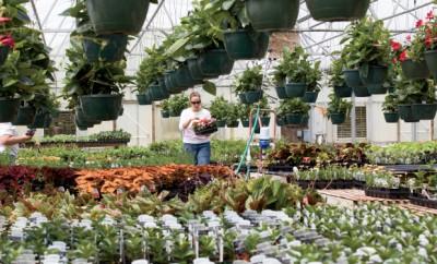 Nursery Industry in Illinois