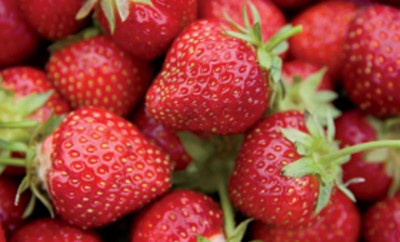 Millcreek Farm Strawberries