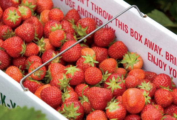 Strawberry Jazz Festival