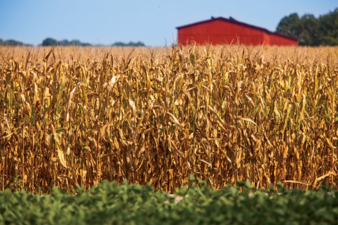 field corn facts