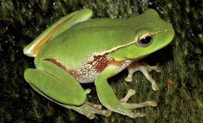 Galena Frog Walk