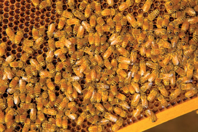 Farm Facts Bees