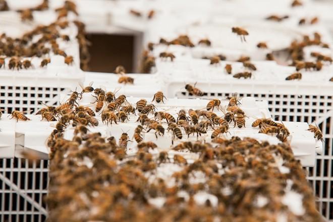 Long Lane Honeybee Farm