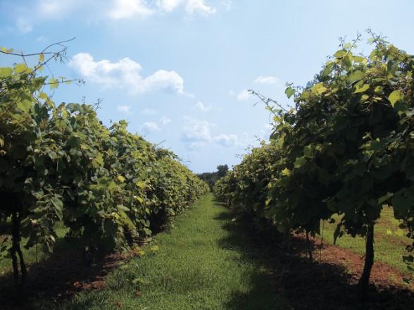 Kickapoo Creek Winery