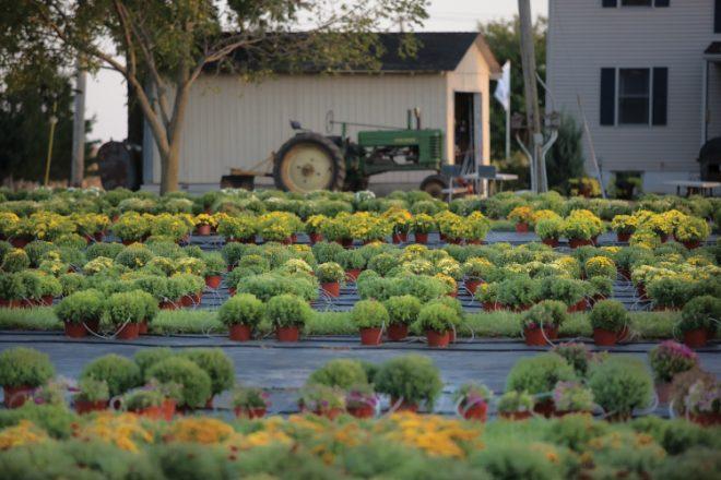 DeWitt County Farm Crawl