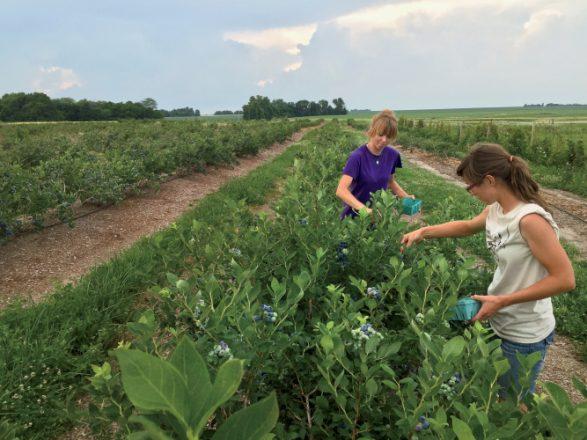 Kern Family Farms