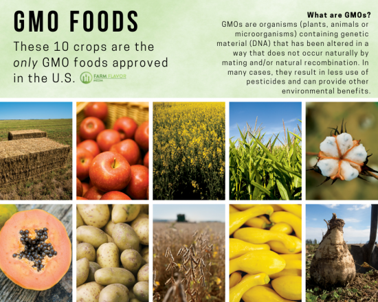 what are GMOs graphic