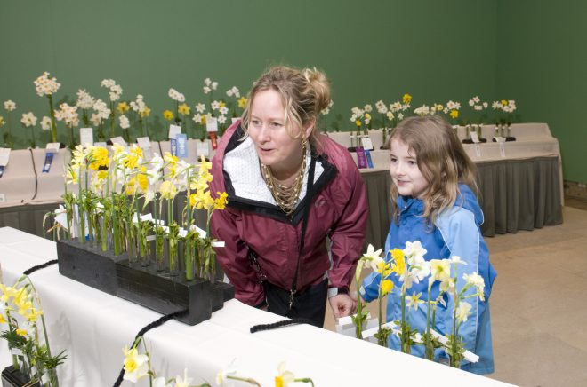 daffodil show09-388