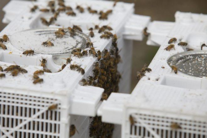 Long Lane Honey Bee Farms 14556 N. 1020 E. Road, Fairmount, Illinois