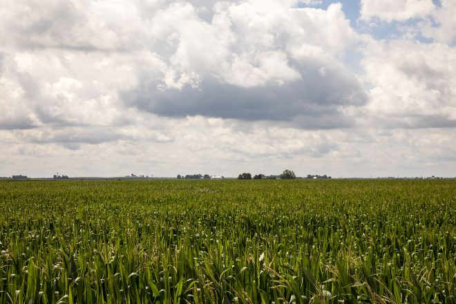 corn_Edgar 6_18 22