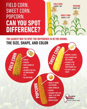 20-818 aitc field sweet pop corn ad-flyer
