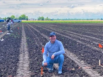 SIUC professor Alan Walters, Ph.D., in one of his horseradish research fields during planting earlier this year. Walters has traveled to Europe researching the crop. (Photo courtesy of Alan Walters)