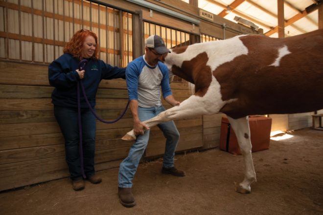 Chiropractor to the Animals